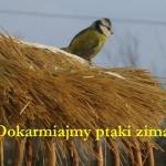 Chleb pszenno-żytni ze...