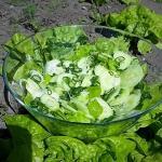 Zielona salata z ogorkiem...
