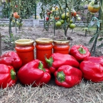 Sos pomidorowy z...