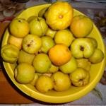 Nalewka na owocach...