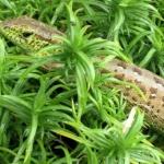 Nasze ogrodowe krokodyle...
