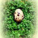 Wielkanocne pierepalki i ...