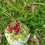 Muffinki  Leśny mech