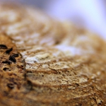 Projekt chleb [level 5]: ...