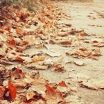 (WB 5)  Ulubione jesienia...