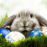 Życzenia na Wielkanoc...