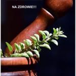 MAJERANEK- 7...