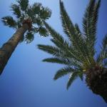 Pod tunezyjskimi palmami