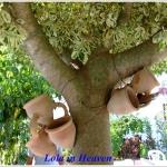 Tunezyjski raj w wiejskie...