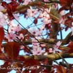 Projekt Sakura –...