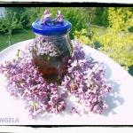 Miod z kwiatami bzu - Lil...