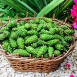 Syrop z zielonych...
