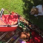 Mały piknik z dziećmi...