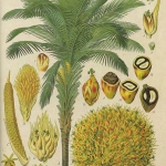 Olej palmowy - jak żyć...