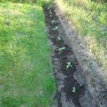 Nasz ogrod w maju