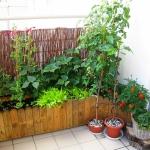 Mini ogródek na...