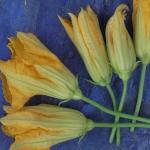 Paczki z kwiatami cukinii...