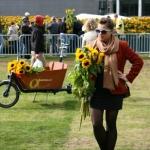 Słoneczniki / Sunflowers