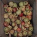 Jak zrobic dzem jablkowy?...